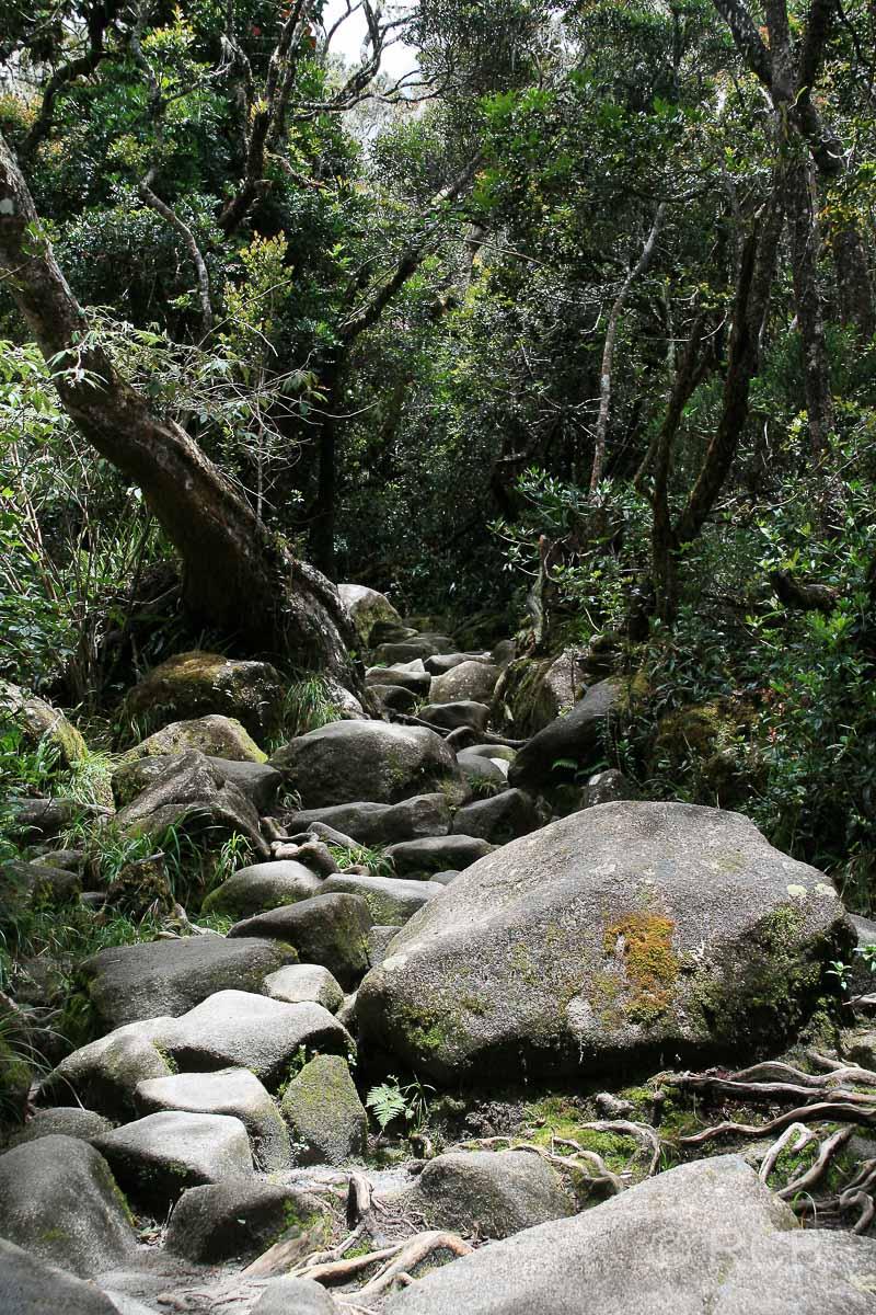 steiniger Weg beim Aufsteig zum Mt. Kinabalu