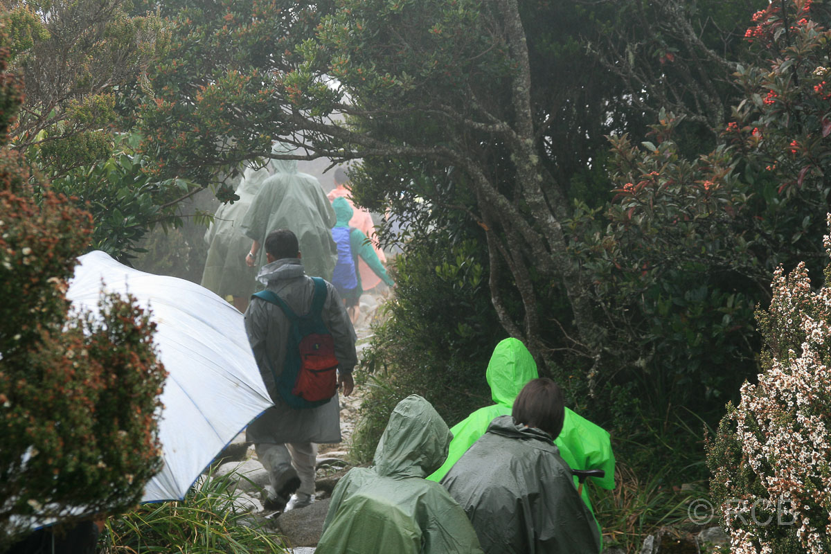 Wanderer in Regensachen beim Abstieg vom Mt. Kinabalu zurück ins Tal
