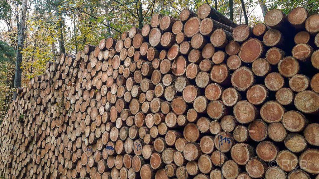 Holzstapel in der Haard