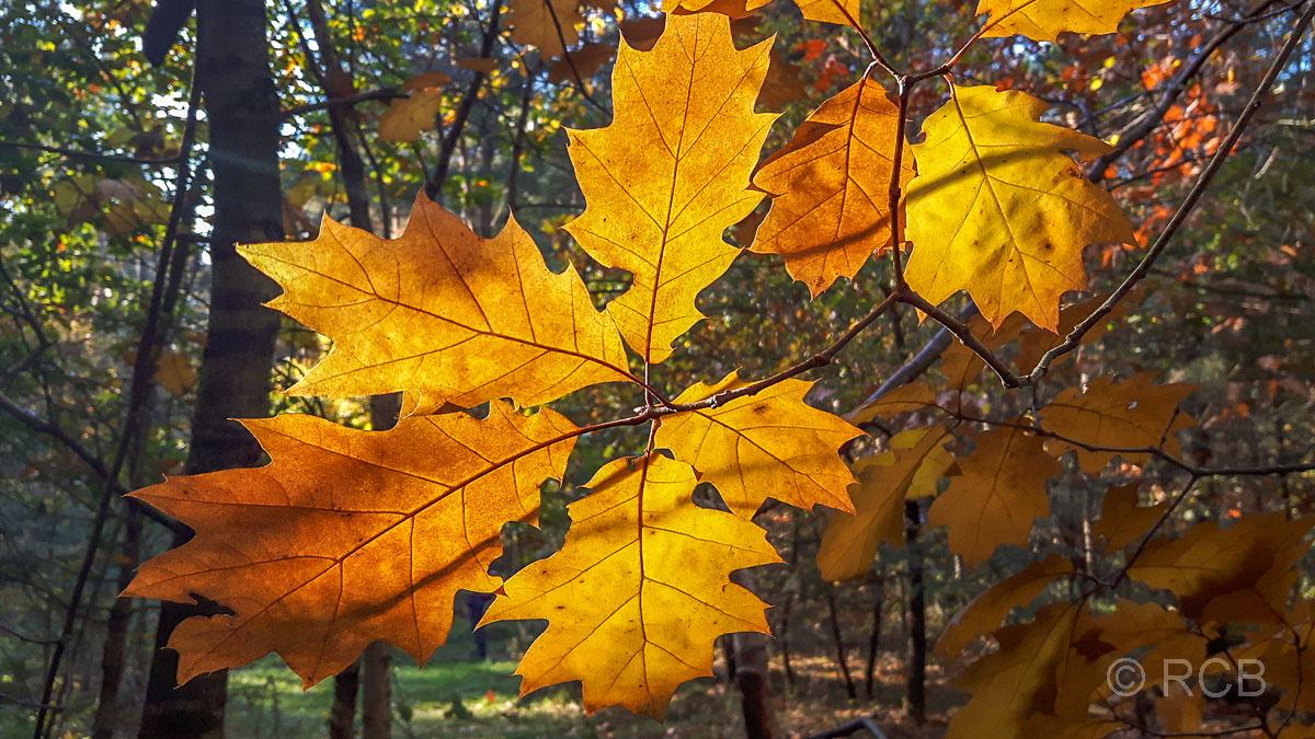 Goldener Oktober Teil 2 – Durch die nördliche Haard