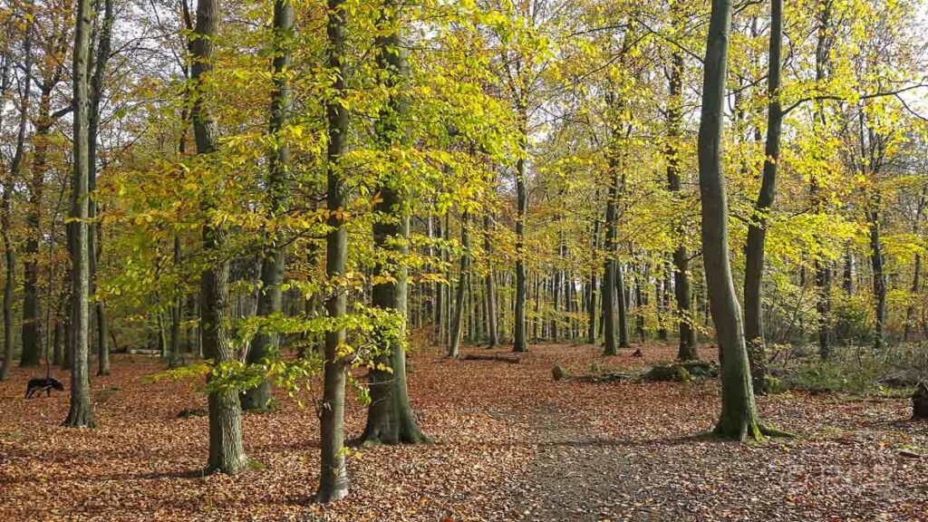 Herbstwald am Schlebrucher Bach