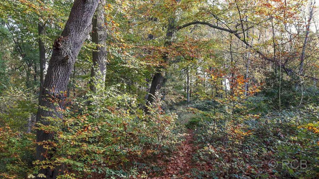 Bäume im Rumbachtal