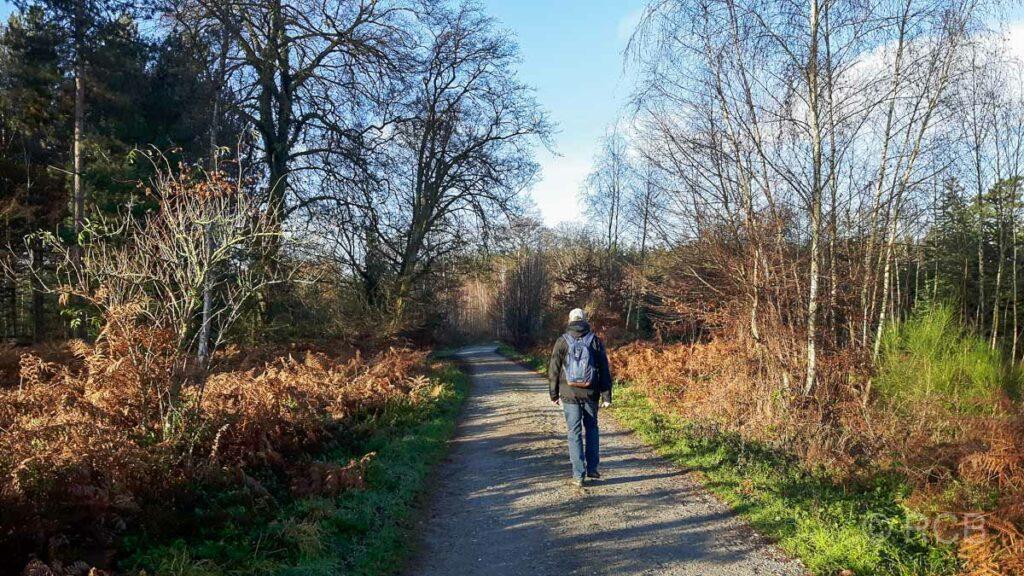 Mann wandert im Ratinger Stadtwald