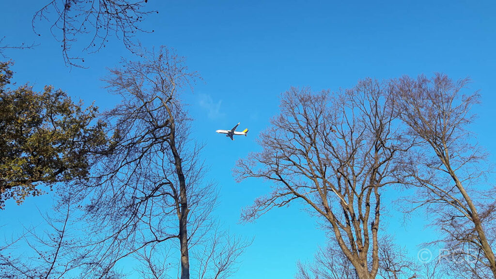 Flugzeug über dem Wald