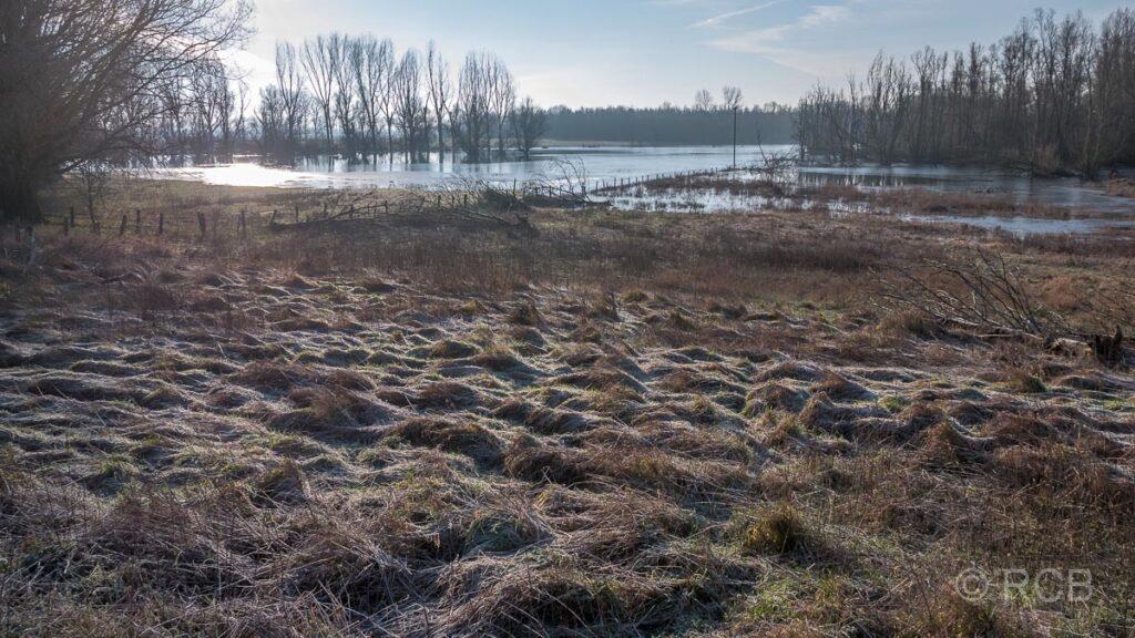 Frost auf den Wiesen an der Bislicher Insel