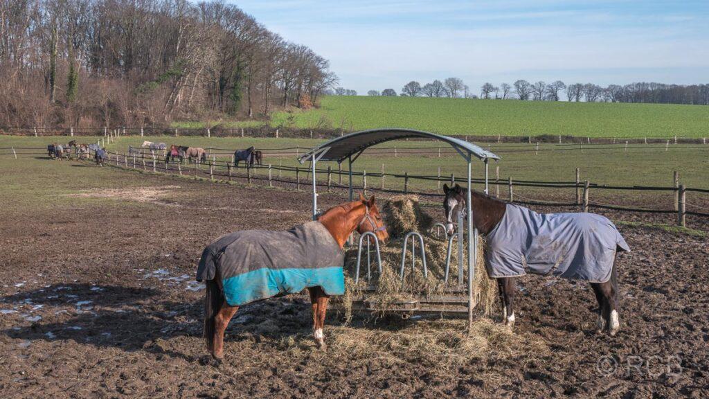 Pferdekoppeln bei Birten