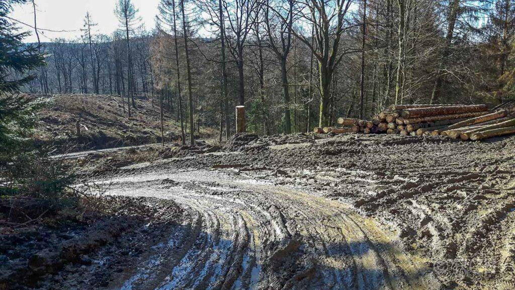 von Forstarbeiten zerwühlte Wege