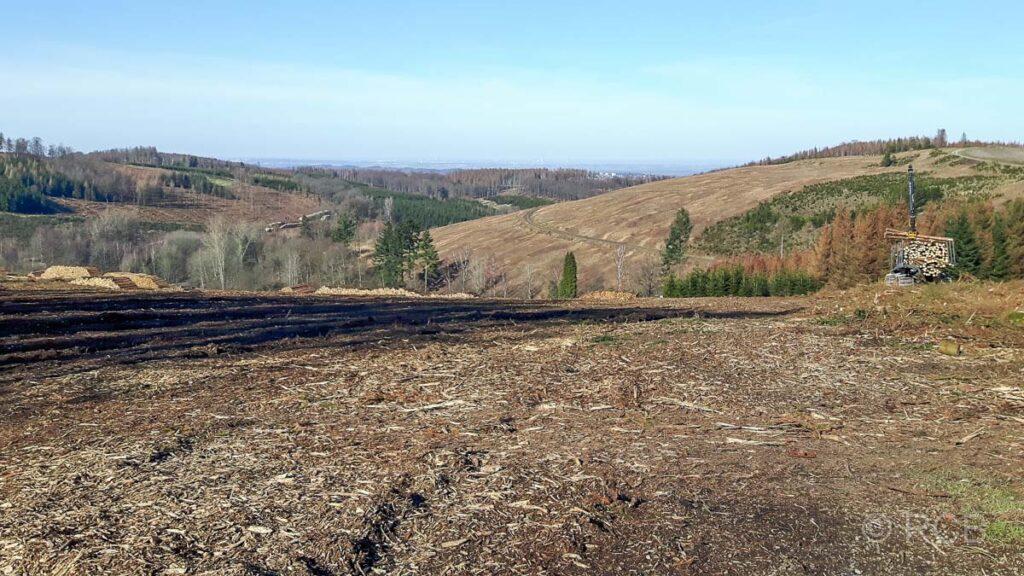 kahlgerodete Waldflächen