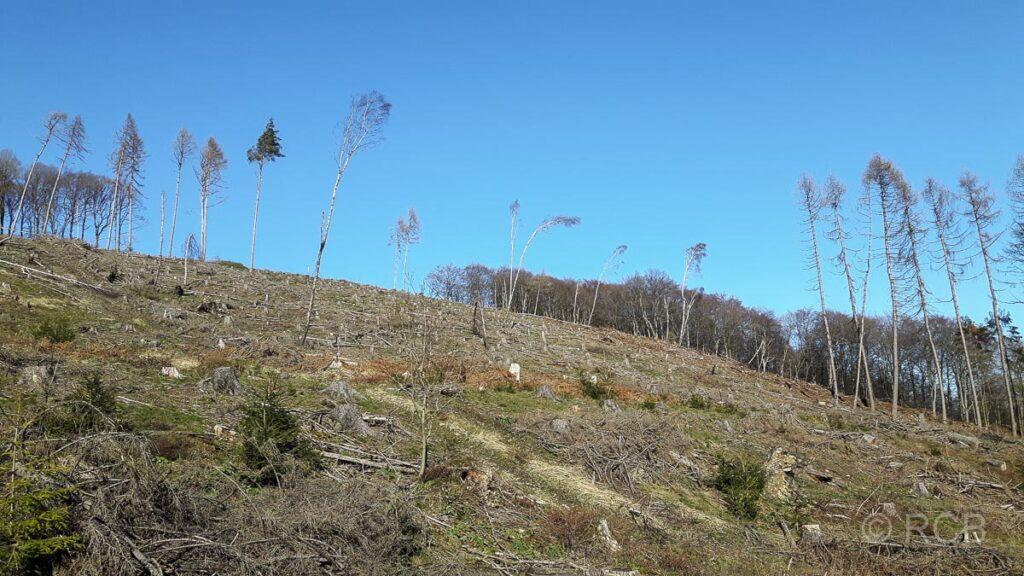Bäume auf gerodtem Hang