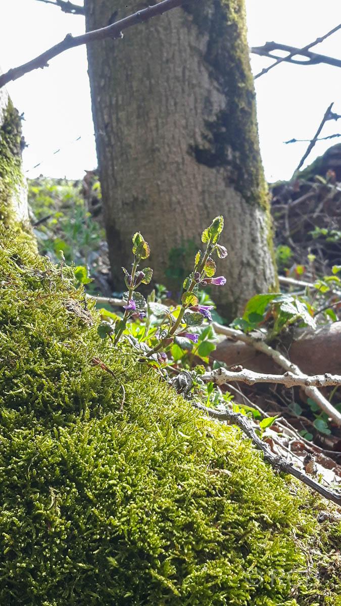 Pflanze wächst aus Moos