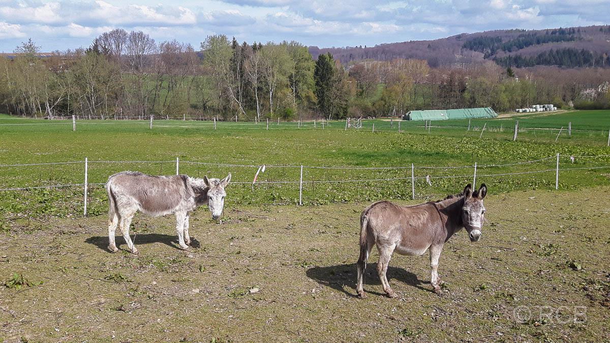 2 Esel
