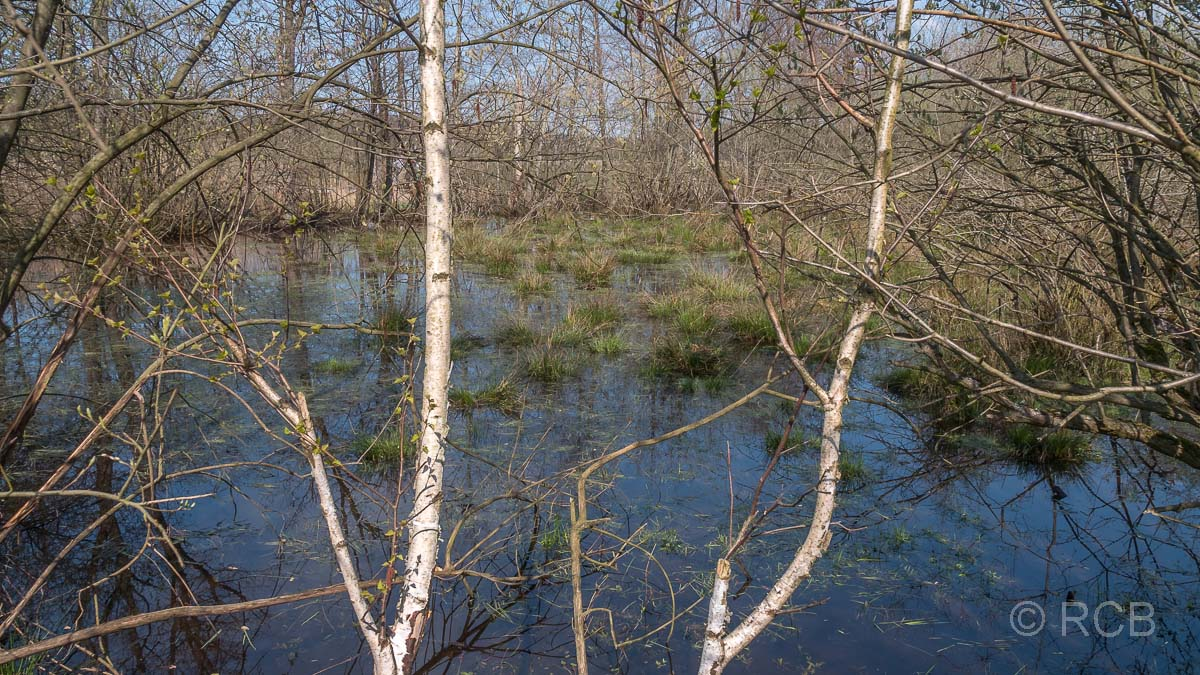 Sumpf im Hervester Bruch