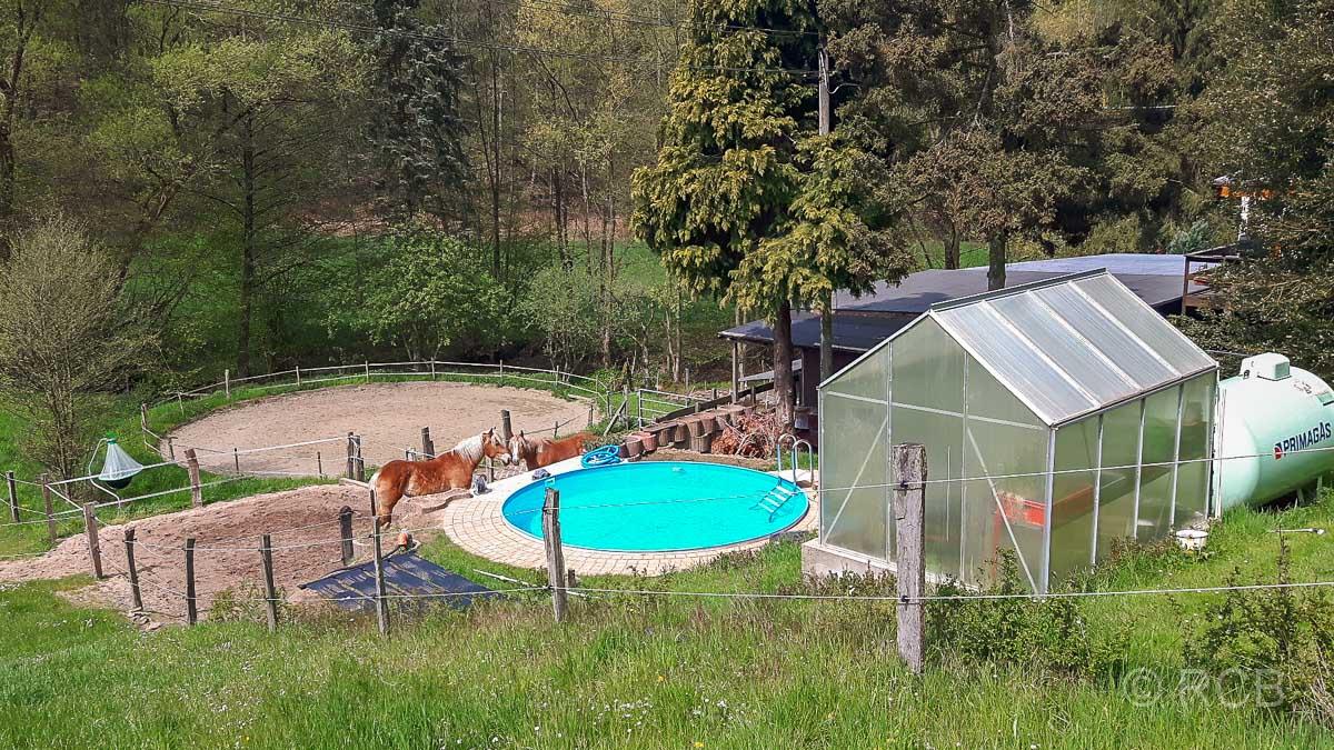 Pferde mit Swimmingpool