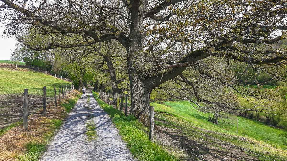 Wanderweg entlang eindrucksvoller Bäume
