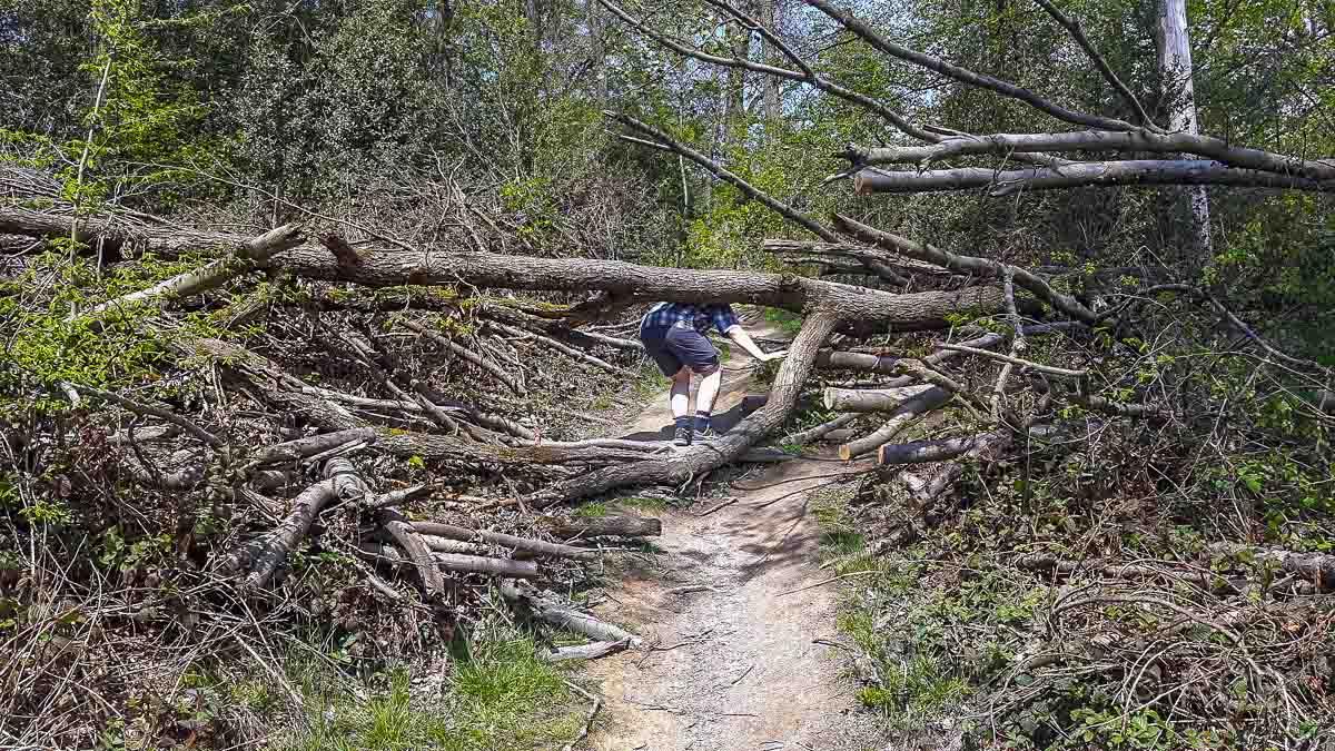 Windbruch auf Wanderweg