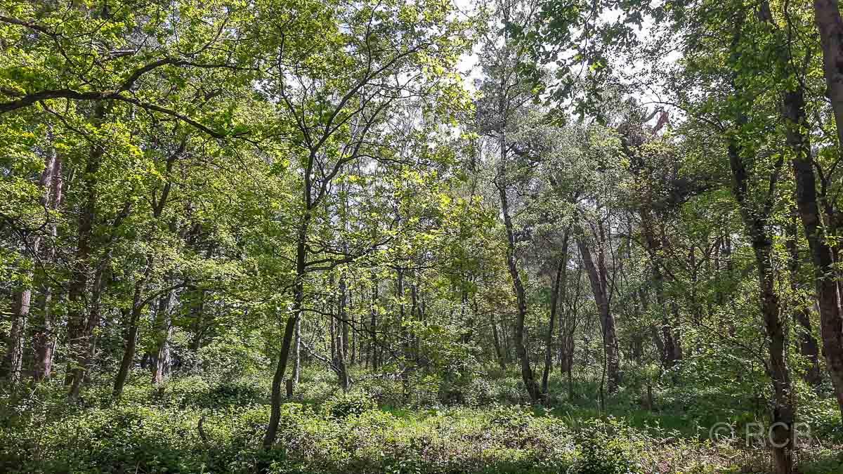 Hier überlässt man den Wald urwaldartig sich selbst.