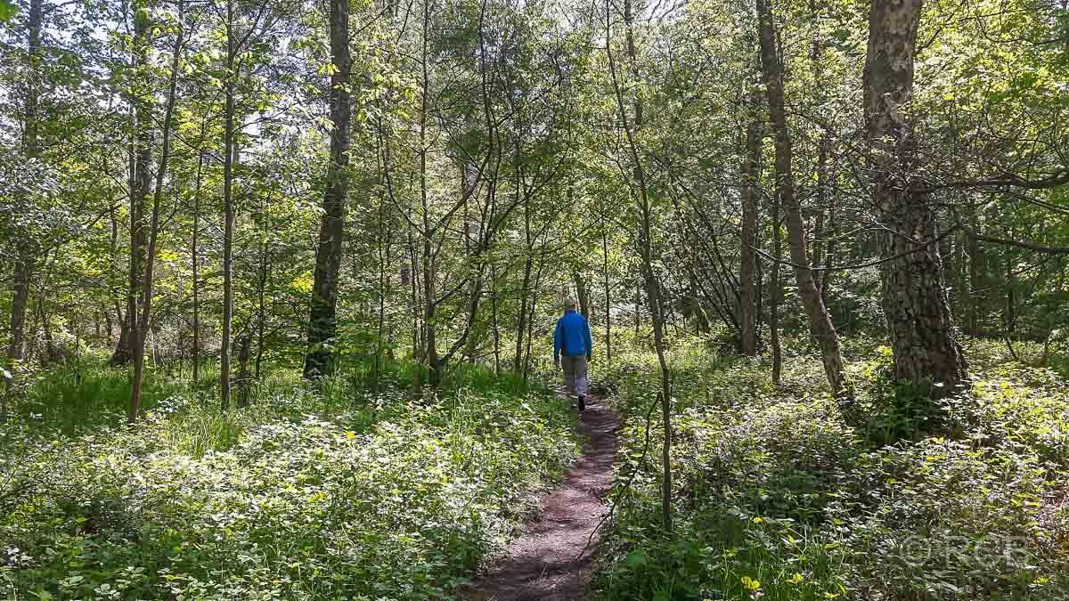 auf schmalem Waldpfad