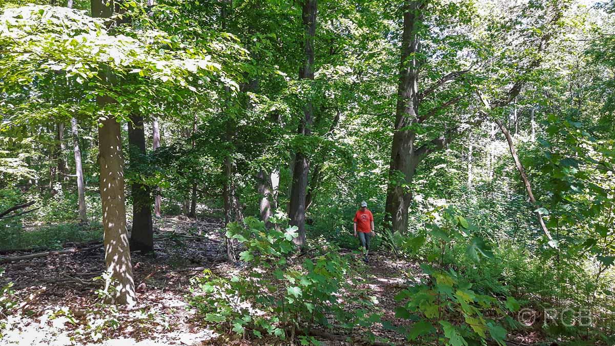 im Wald bei Blankenstein