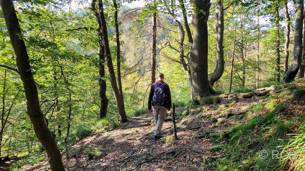 Waldweg oberhalb der Wupper